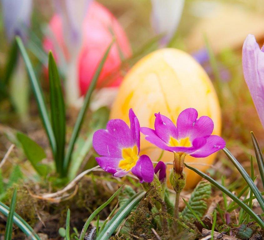 Offre Vacances de Pâques